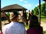s žirafami